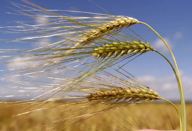 Landroof: Wie krijgt het graan uit de Oekraïne ...